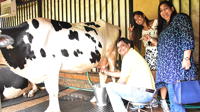 Experience Milking Jersey Cows at Della only