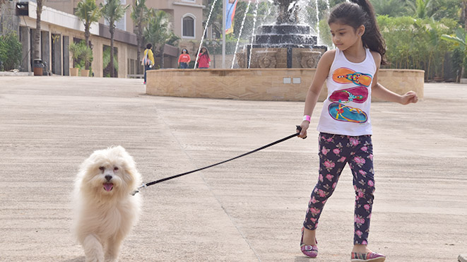 Go for a Walk with our cute dogs at Della Adventure Park